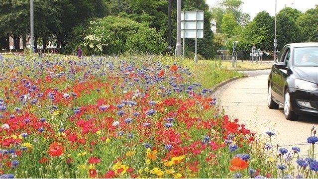 Should Raunds Adopt Wildflower Roadside Verges?